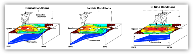 "Three-dimensional diagram showing the general pattern of sea surface temperatures, atmospheric circulation and position of the ocean thermocline under normal, ""La Niña"" and ""El Niño"" conditions."