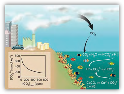 Illustration of the chemical reaction that takes place in the ocean with the addition of carbon dioxide.